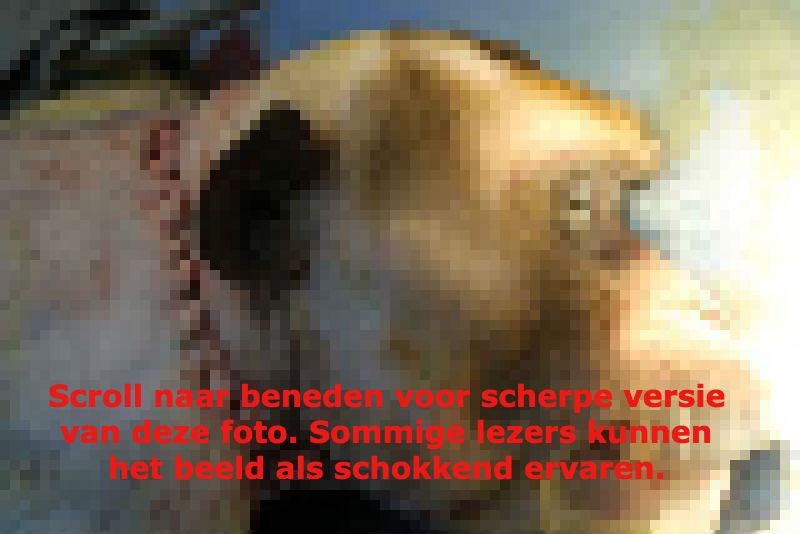 hoofdtransplant aap met tekst