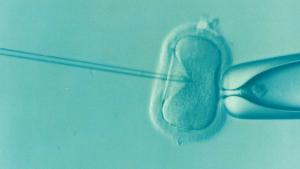 Deze embryo in spe heeft mogelijk baat bij seks van de toekomstige ouders. Beeld: Pixabay.