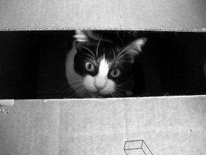 Een slim experiment houdt Schrödingers kat levend – en dood – na in tweeën gezaagd te zijn. Foto: frankieleon