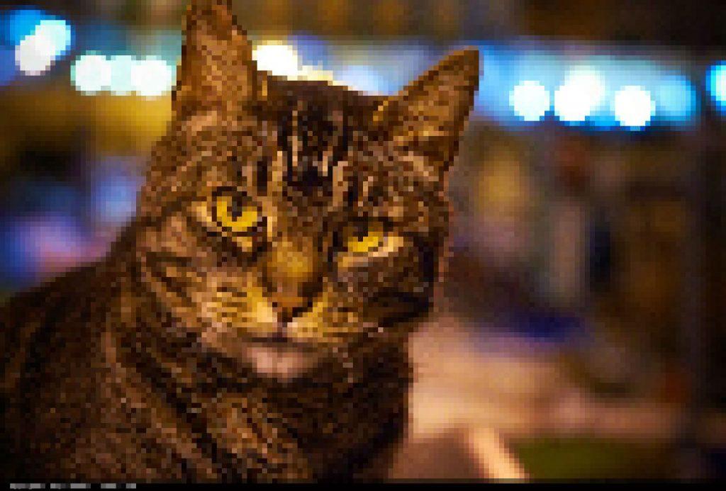 Kan een neuraal netwerk ooit over de kat van Schrödinger dromen? Foto: Moyan Brenn