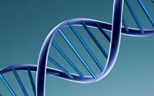Dubbele strengen DNA in helixvorm. Credit: Caroline Davis
