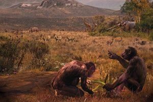 voorouder-mens-chimpansee-europa