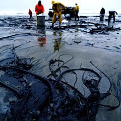 We kunnen bacteriën maken die olierampen kunnen helpen opruimen