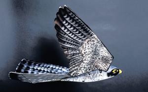 robird 2