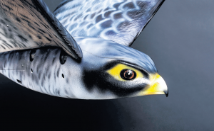 Vogels blijven bang voor hun natuurlijke vijanden, zelfs als die nep zijn. Foto: Clear flight solutions