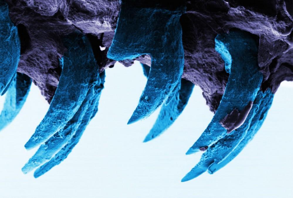 schaalhoren tanden hardste materiaal - university of portsmouth