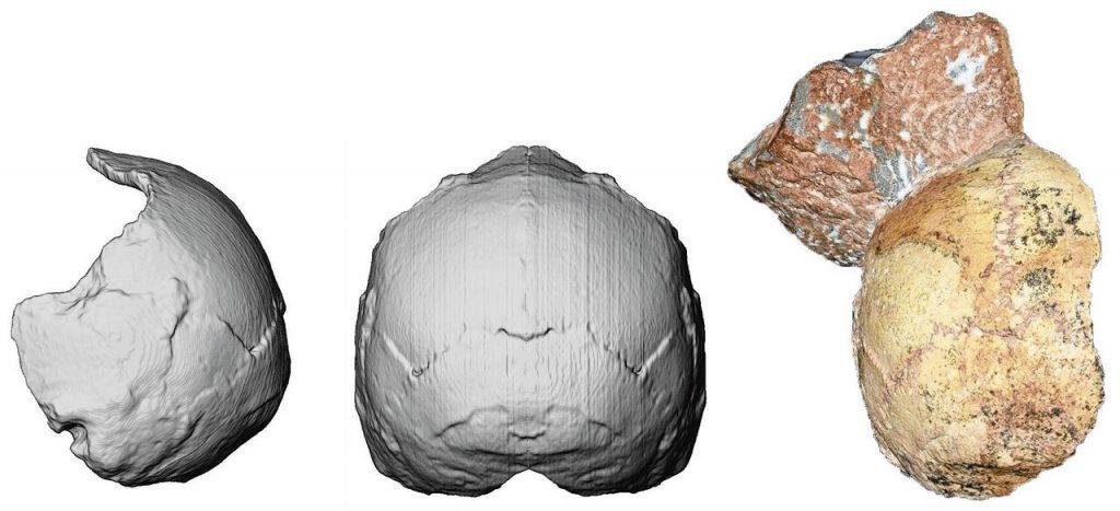 De schedel zit vast aan een steen. Foto: Katerina Harvati