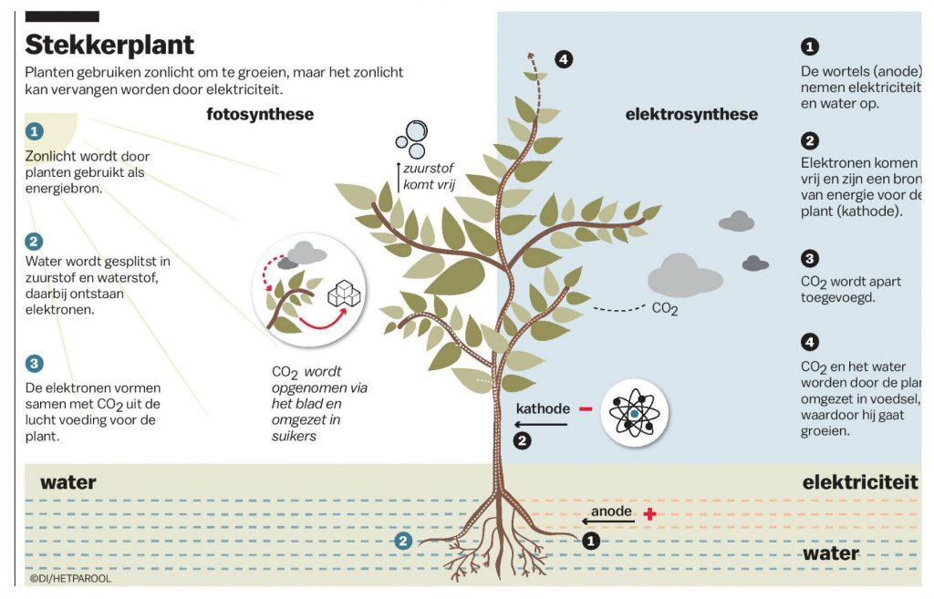 Planten gebruiken zonlicht om te groeien, maar je kunt licht als energiebron vervangen door elektriciteit. Fotosynthese wordt dan elektrosynthese.
