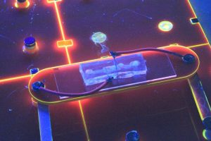 Lamp van E. coli. Beeld: Ollie Burton/CultureShock