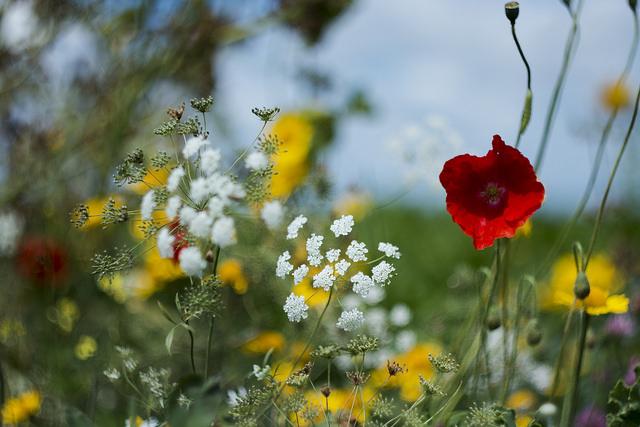 nederlandse zadenbank stopt alle wilde bloemen in de vriezer - new